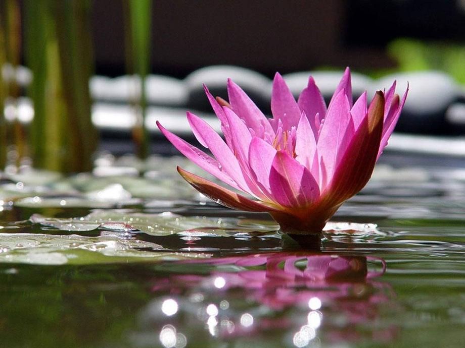 Charla y Curso: MINDFULNESS, atención plena para reducir las preocupaciones y el estrés.